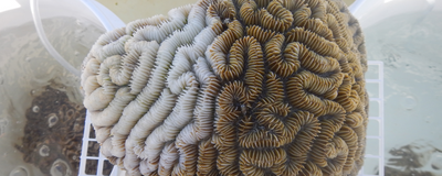 Image of the Day: Coral Disease