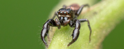 Image of the Day: Spider Spotting