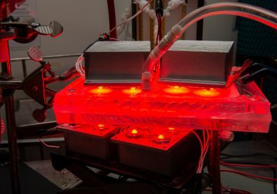 Blood-Cleaning Machine Quickly Eliminates Carbon Monoxide in Rats