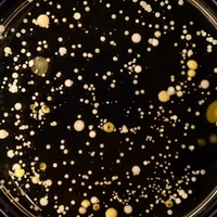 Image of the Day: Hand Microbes