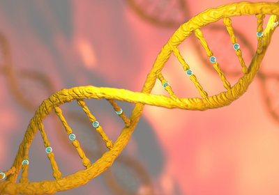"""New """"Prime Editing"""" Method Makes Only Single-Stranded DNA Cuts"""