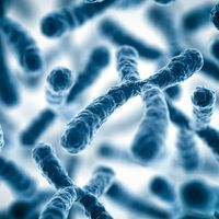 Streamlined Artificial Chromosome Creation