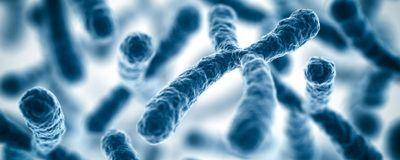 Streamlined Artificial Chromosome Creation