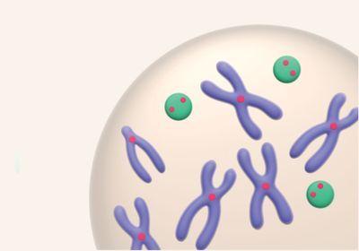 Infographic: Building an Artificial Chromosome