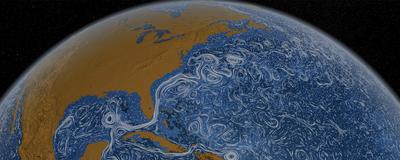 How Interconnected Is Life in the Ocean?