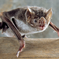 Social Bonds Among Captive Vampire Bats Persist in the Wild