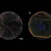 Image of the Day: Fungal Feature Tracker