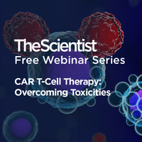 CAR T-Cell Therapy: Overcoming Toxicities