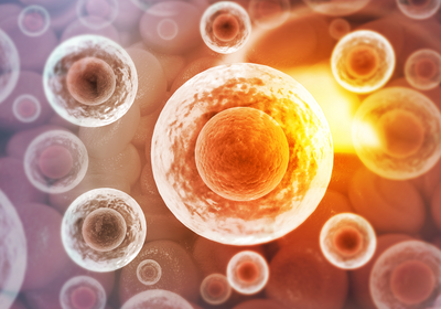 Dramatic Temperature Spikes Inside Cells Draw Interest, Skepticism