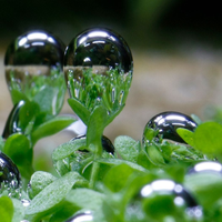 Image of the Day: Bubbling Plants