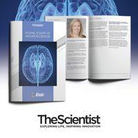 Rising Stars in Neuroscience