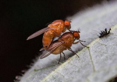 Sex Promotes Lasting Memories in Female Flies