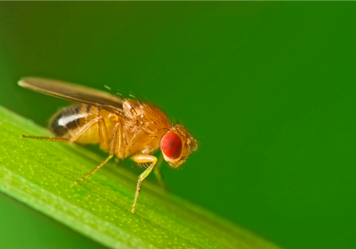 Sex Promotes Lasting Memories in Female Flies