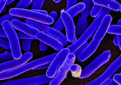 Lab-Evolved <em>E. coli</em> Consume Carbon Dioxide