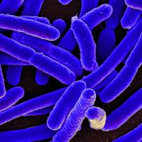 Lab-Evolved <em>E. coli</em> Consume Carbon Dioxide