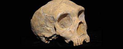 <em>Homo sapiens</em> Might Not Be Responsible for Neanderthal Demise
