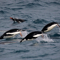 Image of the Day: Penguin Populations