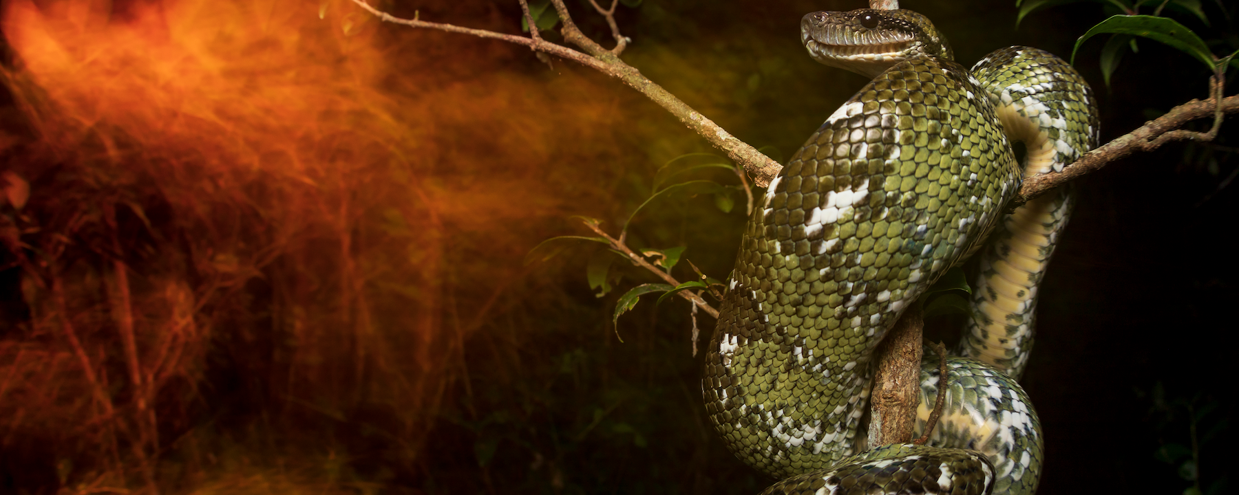 Image of the Day: Snake in Smoke