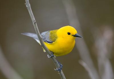 Climate Change Linked to Shrinking Bird Sizes: Study