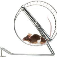 Early Epigenetic Changes Regulate Voluntary Exercise in Mice: Study