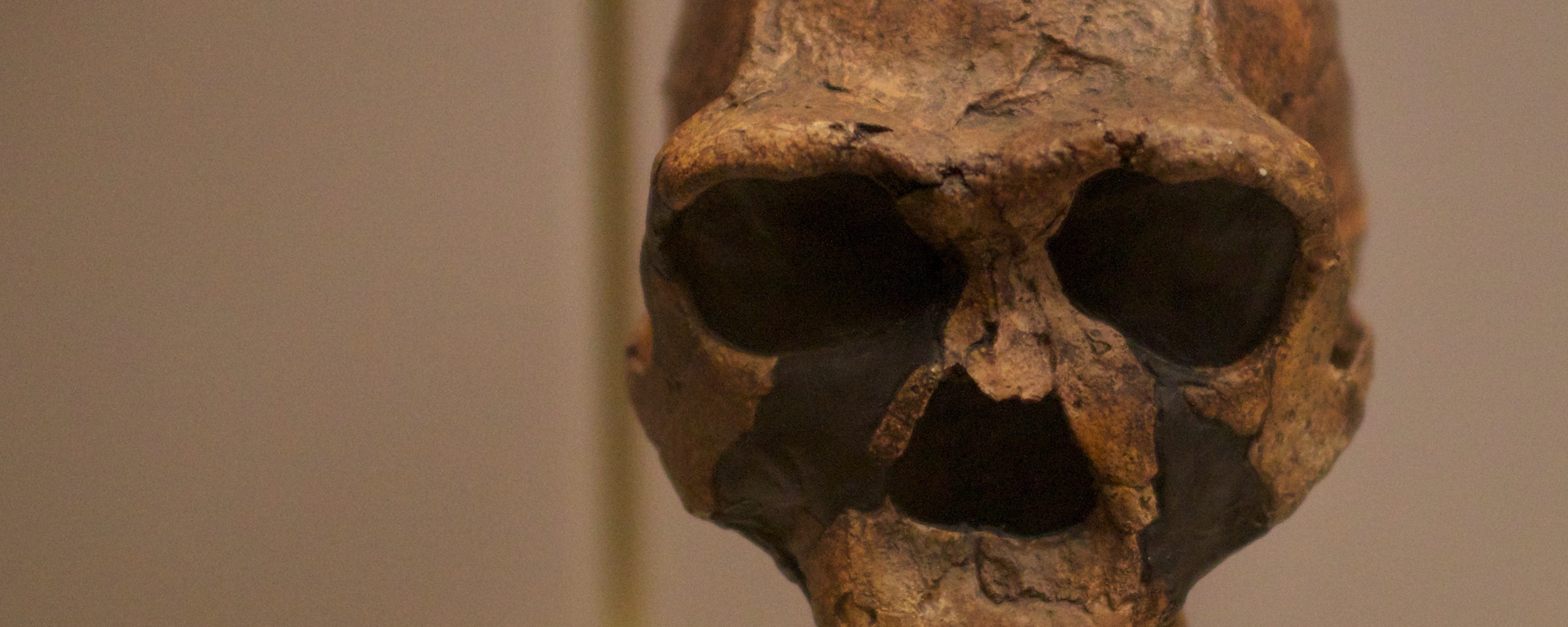 Reanalyzed Fossils Could Be Last Known<em>&nbsp;Homo erectus</em> Specimens