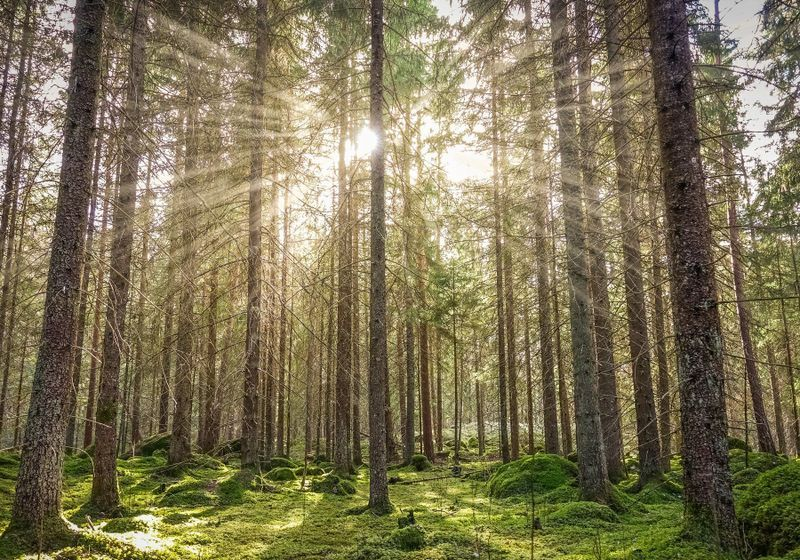 Smells of Nature Lower Physiological Stress | The Scientist Magazine®