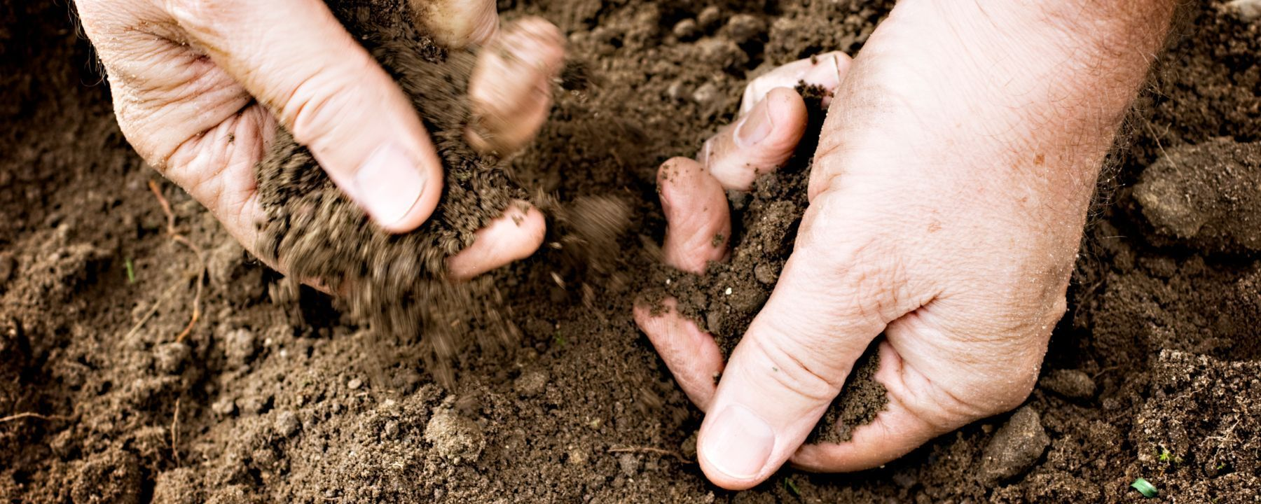 The Influence of Soil on Immune Health