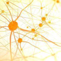 Addictive Behavior Control Circuit Discovered in Rat Brains