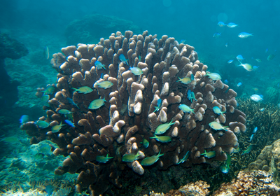 Study Refutes Findings that Acidification Affects Fish Behavior