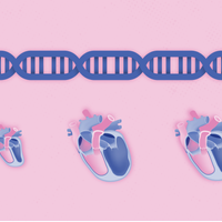 Infographic: How Splicing of Genes Can Affect Heart Health