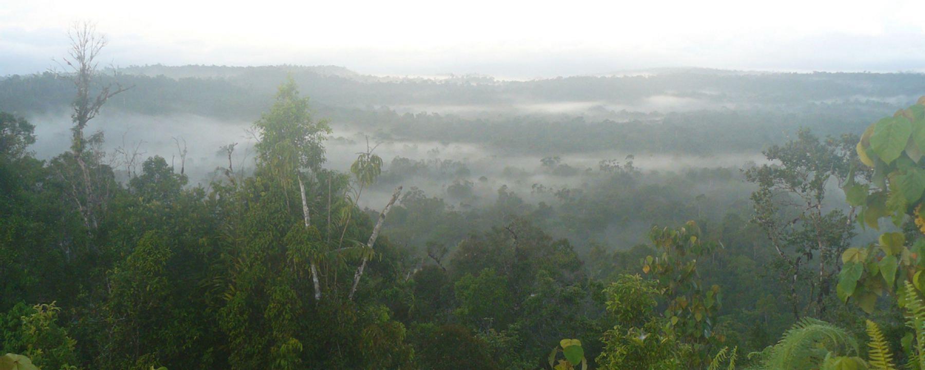 Ten Bird Species Newly Identified on Indonesian Islands