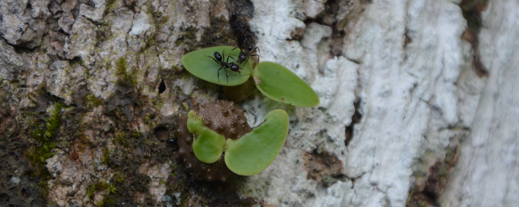 Image of the Day: Farming Ants