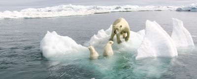 Ozone-Depleting Chemicals Led 20th Century Arctic Warming: Study