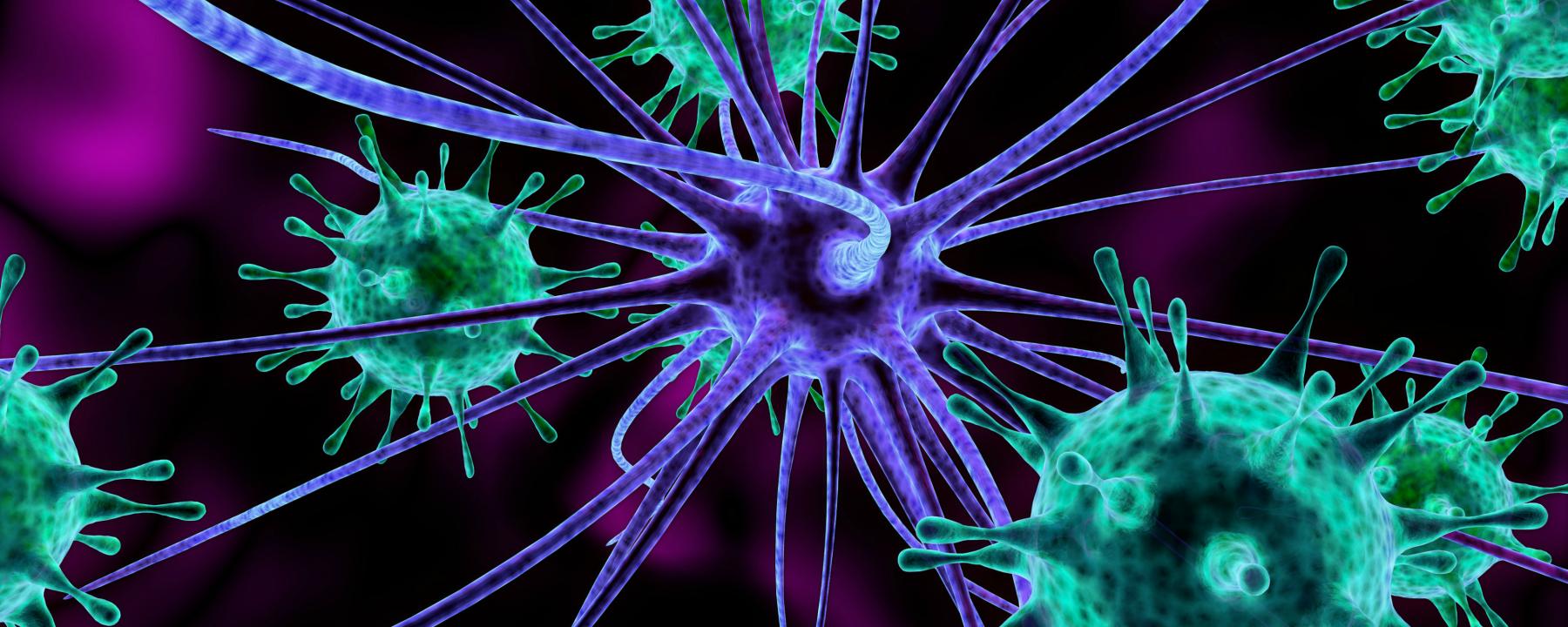 Study Finds No Association Between Herpes Virus and Alzheimer's