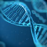 在人类细胞中发现了新的dna感应通路,而在小鼠中没有