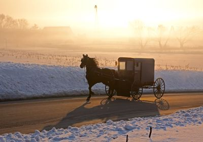 Human Mutation Rates Steady Across Groups—Except in the Amish