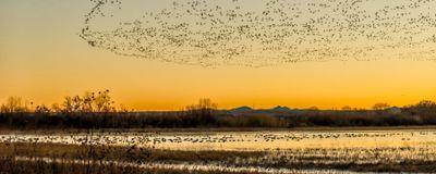 Trump Administration to Weaken Migratory Bird Protections