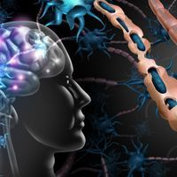 Inadequate Myelination of Neurons Tied to Autism: Study