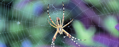 Top Spider Biologist's Research Under Fire