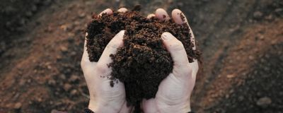 It Takes Less Than 30 Days to Compost a Human Body