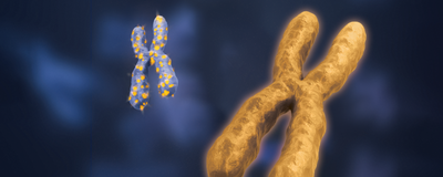Genes that Escape Silencing on the Second X Chromosome May Drive Disease