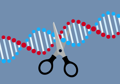 CRISPR Can Create Unwanted Duplications During Knock-ins