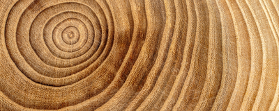 Opinion: Tree Rings as Soothsayers