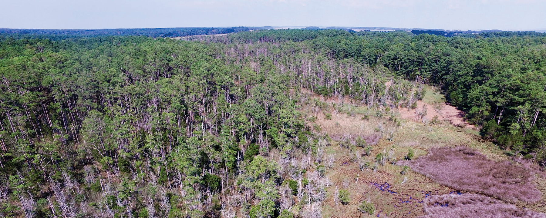 Climate Change Is Killing East Coast Forests