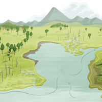 Interactive Infographic: How Salt Transforms Coastal Forests