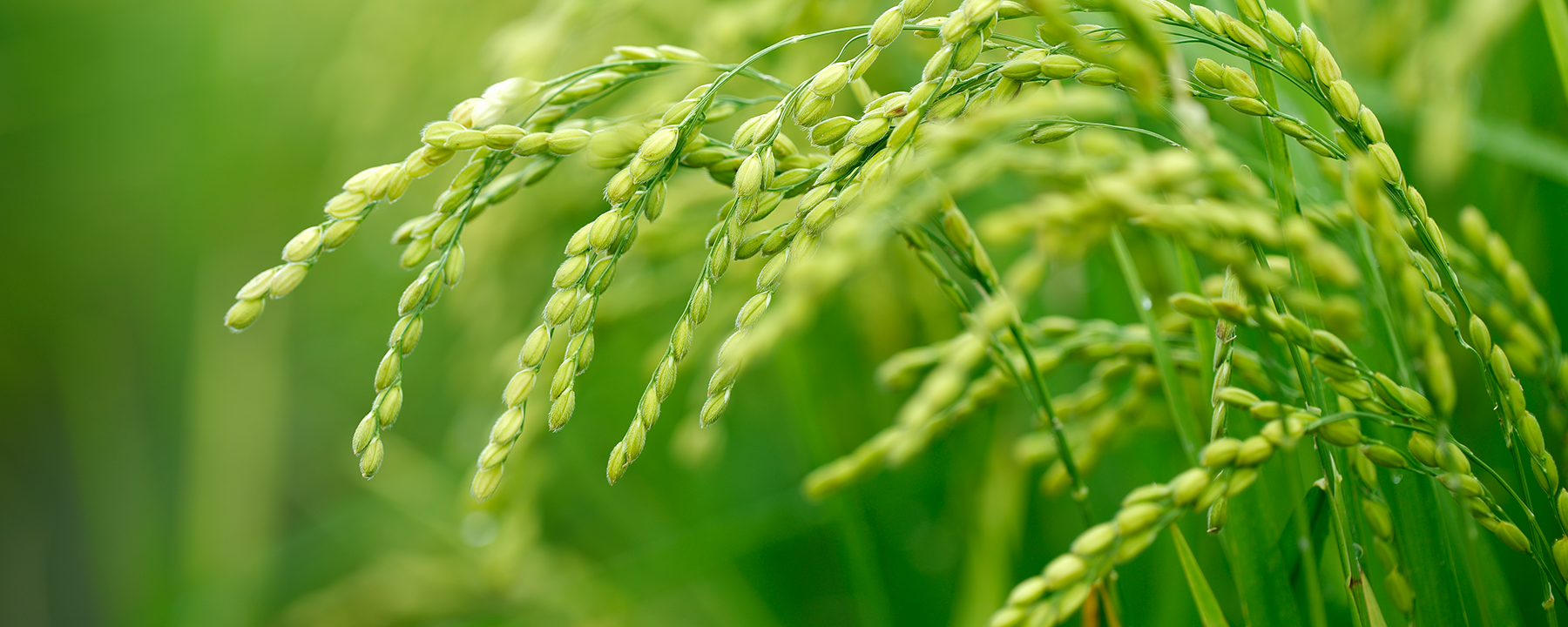 Genomics Reveals How Humans Can Inadvertently Drive Plant Mimicry