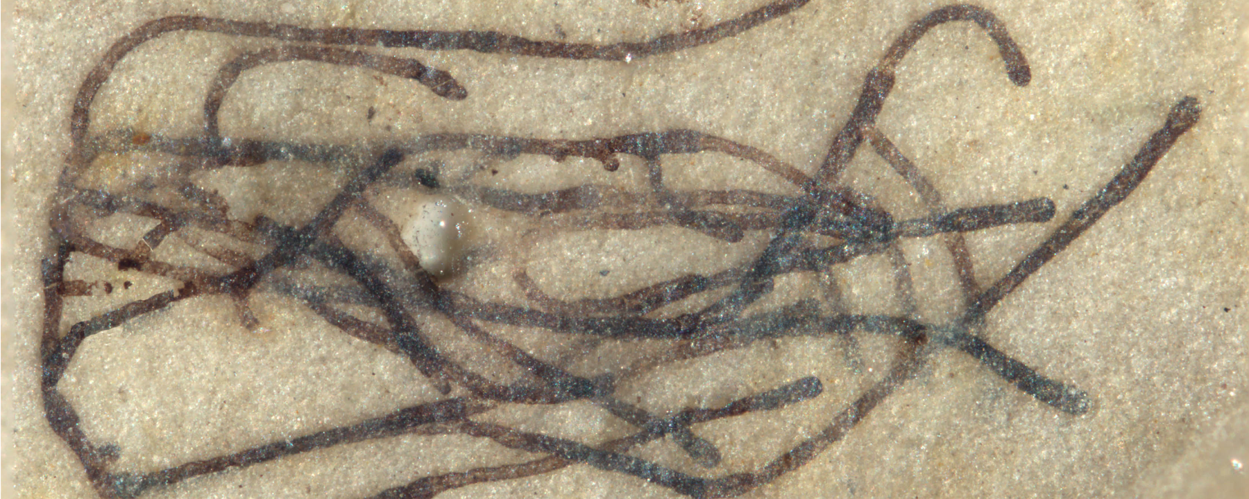 Oldest Green Algae Fossil Discovered in China