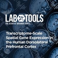 Transcriptome-Scale Spatial Gene Expression in the Human Dorsolateral Prefrontal Cortex
