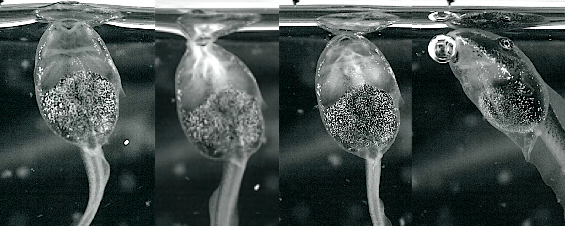 Image of the Day: Bubble Suckers