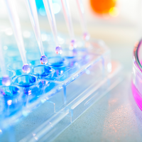 Scientists Grapple with US Restrictions on Fetal Tissue Research